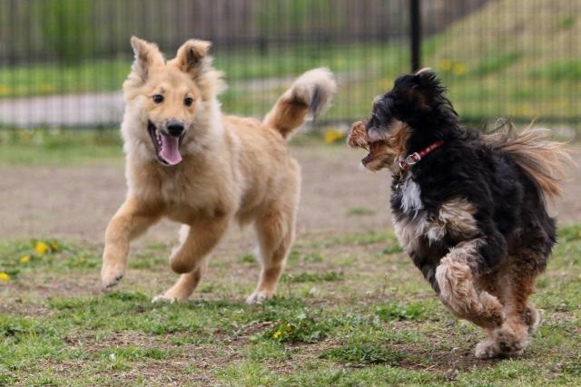 ドッグランで遊ぶ犬たち