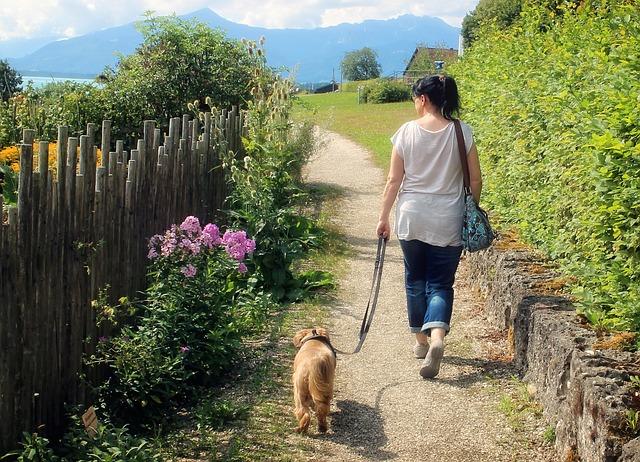 犬の散歩画像